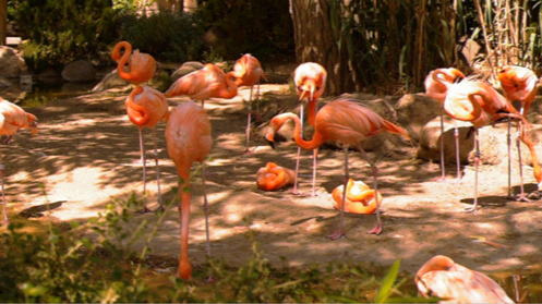 Bernell 3-D Blu-Ray Flamingos