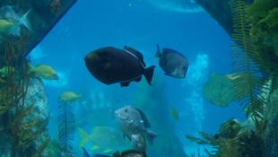 Bernell 3D - Aquarium