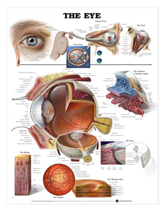 3D Relief ChartThe Eye